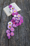 Pink asters stock image