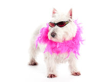 Pink Attitude Royalty Free Stock Photos