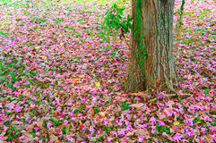 Pink autumn Stock Image