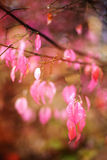 Pink autumn leafs Royalty Free Stock Photos