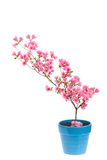 Pink azalea branch Stock Photo