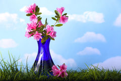 Pink Azalea flowers in blue vase Royalty Free Stock Photos