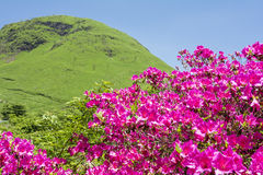 Pink azalea and hill Royalty Free Stock Photography