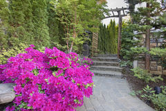 Pink Azaleas Blooming Along Garden Path. Pink Azaleas Blooming in Spring Along Garden Brick Paver Path with Wood Arbor Royalty Free Stock Photo
