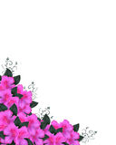 Pink Azaleas Invitation Border  Stock Photos