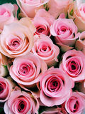 Pink baby roses. Conceptual cross process  reproduction showing a very beautiful bouquet of pink baby roses Stock Photography