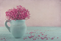 Pink baby's breath flowers in a blue jug Royalty Free Stock Photo