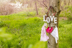 Pink baby shoes and dress hanging on the tree Stock Photos