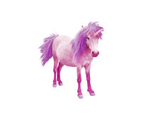 Pink baby unicorn. Horse with violet mane and tail isolated on white Royalty Free Stock Photo