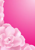 Pink Background. Made of pink roses flowers Stock Images