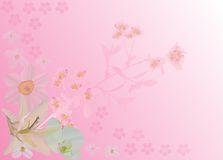 Pink background with cherry flowers and lily Stock Photo