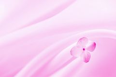 Pink background with flower. Pink fabric background with hydrangea flower royalty free stock photos