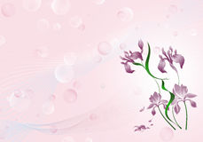 Pink background with flowers. And bubbles Royalty Free Stock Image