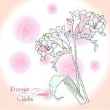 Pink background  with  freesia Stock Photos