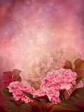 Pink background with geranium flowers Royalty Free Stock Photography