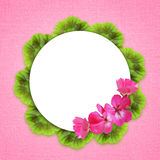 Pink background with geranium flowers Stock Photos