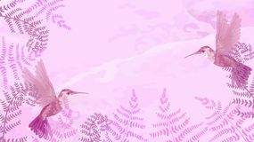 Pink background with hummingbirds and ferns. Template for horizontal banner. Vector graphics. Pink background with hummingbirds and ferns. Template for royalty free stock image