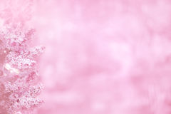 Pink background with lilac flowers. In left edge line in soft focus Stock Photos