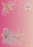 Pink background with lily and orchid flowers Royalty Free Stock Images