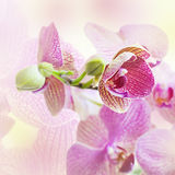 Pink background with orchid flowers Stock Photo