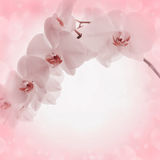 Pink background with orchid flowers Royalty Free Stock Photography