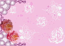 Pink background with rose flowers Stock Image