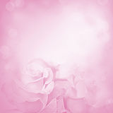 Pink background with rose flowers Royalty Free Stock Image