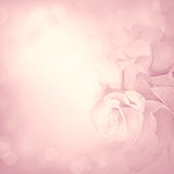 Pink background with rose flowers Stock Photography