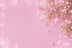 Pink background with small white flowers and bokeh, with copy sp royalty free stock image