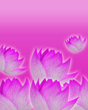 Pink background with tender pink flowers Royalty Free Stock Photo