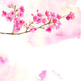 Pink background with watercolor branch of cherry