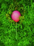Pink balloon on a green cypress in the park. royalty free stock photo