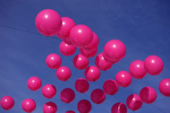 Pink Balloons Stock Photography