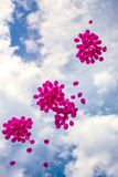 Pink balloons in a blue sky Royalty Free Stock Images
