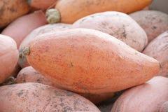Pink banana squash Royalty Free Stock Photos