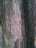 Pink bark background Stock Image