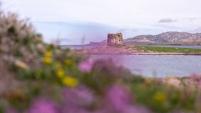 Pink Beach. La Pelosa, Stintino, Sardegna royalty free stock photography