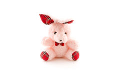 Pink bear doll on white background. Stock Photo