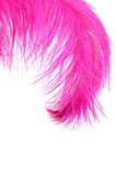 Pink beautiful feather isolated on white Stock Photography