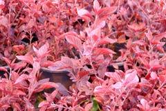 Pink. Beautiful pink flower stock photos