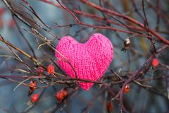 Pink beautiful holiday knitted heart hanging among the branches royalty free stock images