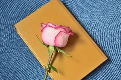 Pink rose on old book stock photos