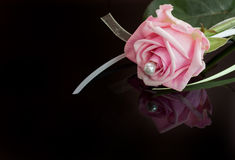 A pink beauty Royalty Free Stock Image