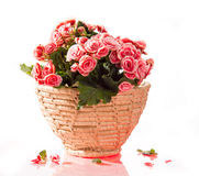 Pink begonia in basket Royalty Free Stock Photography
