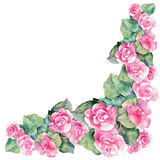 Pink begonia flower, watercolor, corner. Pink begonia flower watercolor  white background  handmade corner Royalty Free Stock Photography