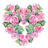 Pink begonia flower, watercolor, garland Royalty Free Stock Photo