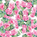 Pink begonia flower, watercolor, pattern seamless Stock Images