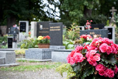 Pink begonia at a tombstone Royalty Free Stock Photo