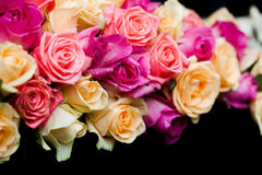 Pink and beige roses border Stock Photography
