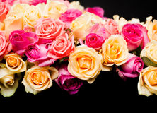 Pink and beige roses border Stock Photo